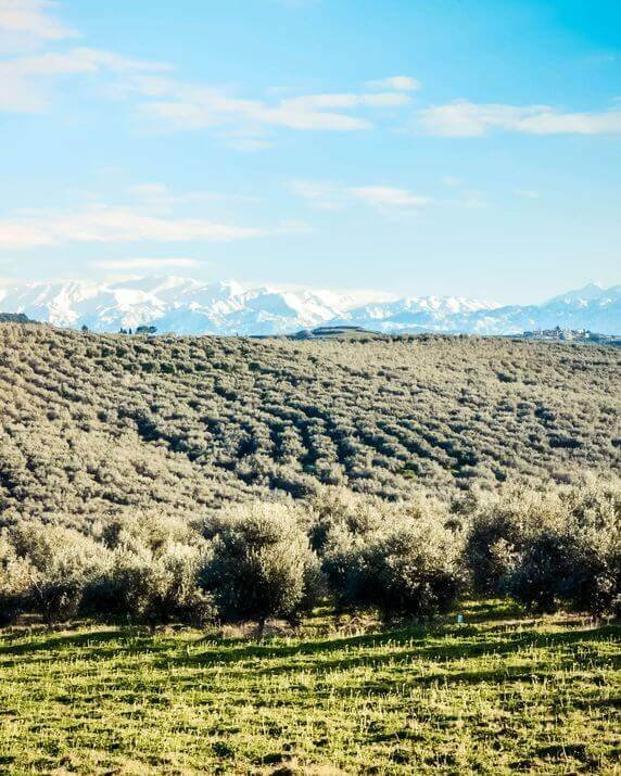 kolymvari-region-organic-olive-groves-3-1.jpg